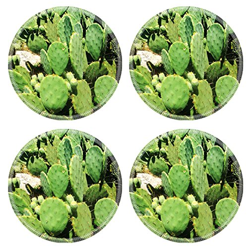 MSD Natural Rubber Round Coasters IMAGE ID 30693253 Photo of exotic plants