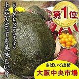 鮮度が違います 大阪中央市場発 スッポン 1尾出荷日にさばきます(4~5人前)( すっぽん 鼈 スッポン鍋 )