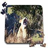 Angelique Cajam Big Cat Safari - Female lion going to sleep - 10x10 Inch Puzzle (pzl_26829_2)
