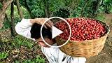 How to buy fair trade coffee