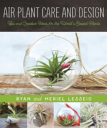 air-plant-care-and-design-tips-and-creative-ideas-for-the-worlds-easiest-plants