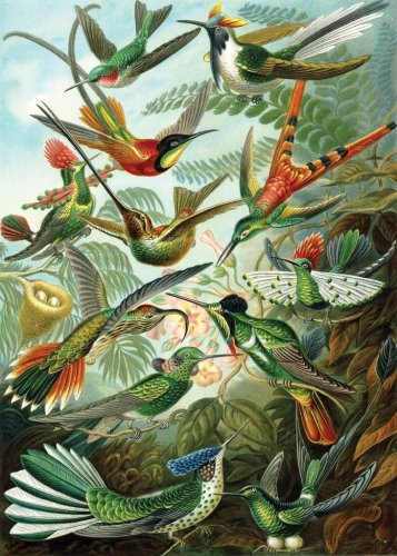 Haeckel Hummingbirds Wooden Jigsaw Puzzle
