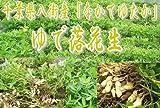 【茹で落花生400g】千葉県八街産「ナカテユタカ」。ゆで落花生!産地ならではの味!