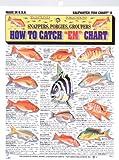 Fishermans Saltwater Fish Chart #6