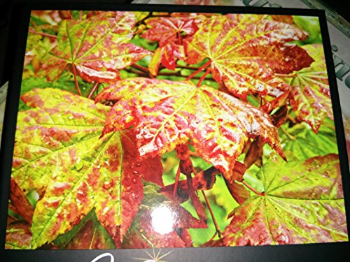 Vibrant Nautilius Shell Puzzle, 500 Piece by Mega Puzzles