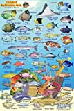 "Cozumel Reef Creatures Guide Franko Maps Laminated Fish Card 4""x6"""