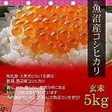 【父の日 プレゼント・カード付】魚沼産コシヒカリ 5kg 玄米・贈答箱入り[即日発送]/ギフトに新潟の最高級ブランド米を