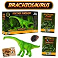 Brachiosaurus Action Figure - Includes Real Dinosaur Bone Fossil!