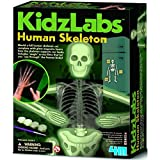 Kidz Labs - esqueleto humano 8 +