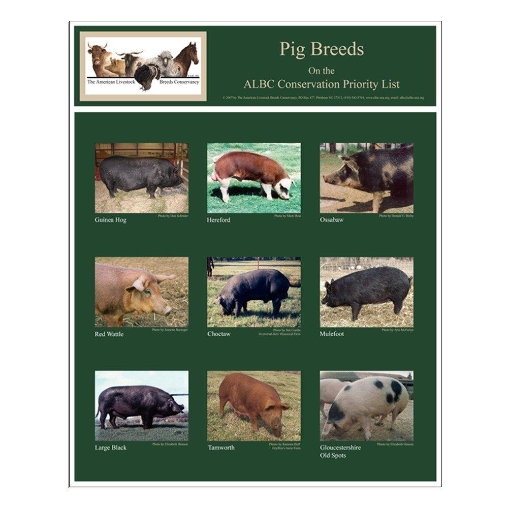 Rare Pig Breeds Poster