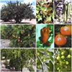 Tratado de fruticultura para zonas �r...