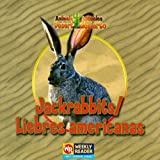img - for Jackrabbits / Liebres Americanas: Liebres Americanas (Animals That Live in the Desert / Animales Del Desierto) book / textbook / text book