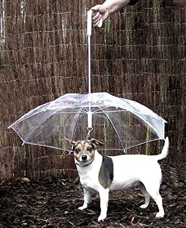 Pet umbrella and dog leash - novelty gag gift