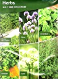 615 Herb Seeds 6 in 1: Parsley Moss Curled/Sweet Basil/Thyme/Chives/Cumin/Coriander/MULTI-BUY DISCOUNT/Popular herbs all year round