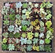 64 Assorted 2 Inch Succulent Wedding Favors, Great for Wedding, Party, Event and Shower Favors