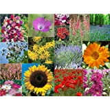 15 Packs of Flower Seeds - inc cosmos, stocks, marigold and moreby Jack Smiths