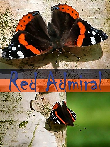 Red Admiral on Amazon Prime Instant Video UK
