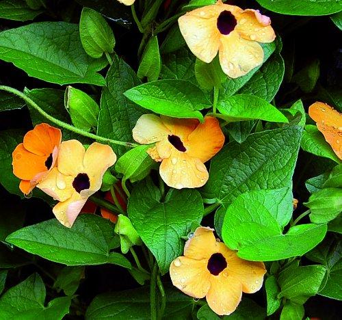 Flower Varieties For Hanging Baskets :