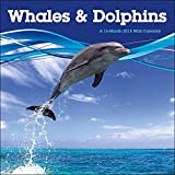 Whales & Dolphins 2015 Wall Calendar