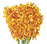 Fresh Flowers - Gold Mokara Orchids
