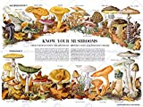 SCIENCE BIOLOGY MYCOLOGY MUSHROOM FUNGUS TOADSTOOL CHART POSTER PRINT BB7301B