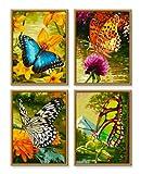 Schipper 609340628 - Malen nach Zahlen - Schmetterlinge (Quattro) je 18x24 cm von Noris