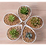 New Great Idea For Small Plants!Cute White Ceramic Drop Shape Flower Pot,Table Small Succulent Flowerpot Planter...