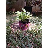 The Garden Store Tin Planter Small Pink