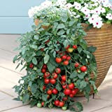 Suttons Seeds 181317 Tomato Tumbling Tom Red Seed