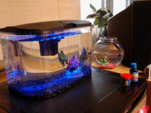 5 gallon fish tank set up how to set up a five gallon for Good fish for 5 gallon tank