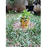 The Garden Store Tin Planter Large Yellow