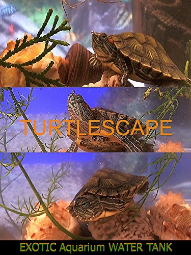 Turtlescape on Amazon Prime Video UK