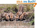 Leoparden und Geparde (Wandkalender 2...