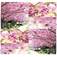 8 x JAPANESE SAKURA FLOWERING CHERRY Tree Seed - Prunus serrulata Seeds - Cherry Blossom - Zones 5 - 8 - By MySeeds.Co