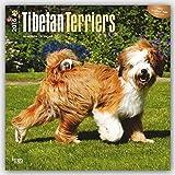 Tibetan Terriers 2016 Calendar