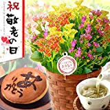 敬老の日ギフト 生花カランコエ鉢花と和菓子きんつばセット