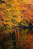 img - for Trees with Red, Orange, Yellow, and Green Leaves Exploding in Autumn Color: Blank 150 page lined journal for your thoughts, ideas, and inspiration book / textbook / text book