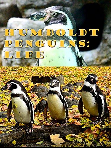 Humboldt Penguins: Life