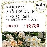 品種はおまかせ!初めての方にもおすすめのバラ大苗4鉢セット(つるバラ2品種、四季咲きバラ2品種)
