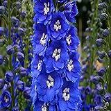 50個の種子/パックフラワー種子デルフィニウムの種子美しい花植物の家の庭の花植物AA