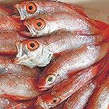魚水島 のどぐろ 日本海産 250g以上・5尾(冷凍)