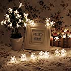 InnooTech Led Sakura Battery Operated String Fairy Light Flower Outdoor Indoor Christmas Tree Light Warm White 40 Led for Bedroom Decoration