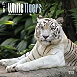 White Tigers 2015 Square 12x12 (Multilingual Edition)
