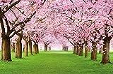 Papel pintado fotogr�fico que muestra un bosque con cerezos - imagen mural y papel pintado de la primavera de color rosa - decoraci�n mural de arboles
