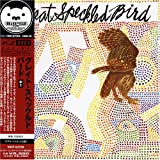Great Speckled Birdby Great Speckled Bird