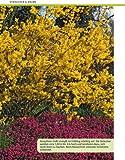 Image de Wie schneide ich meine Gartenpflanzen?: Stopper: Rosen, Hecken, Kletterpflanzen, Bäume, Sträucher
