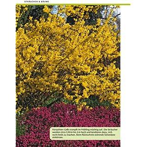 Wie schneide ich meine Gartenpflanzen?: Stopper: Rosen, Hecken, Kletterpflanzen, Bäume, Sträucher