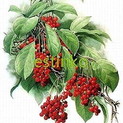 Rare Chinese Herb Schisandra Chinensis Seeds 20pcs/lot Nutrition Vegetable Home Garden Bonsai Plant DIY