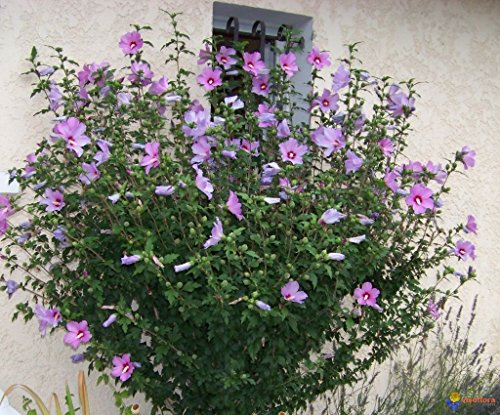 Plants For Dallas Your Source For The Best Landscape Plant
