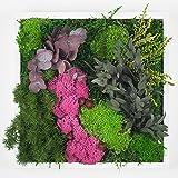 Cadre vegetal nature